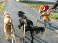 今日も楽しいお散歩でした~
