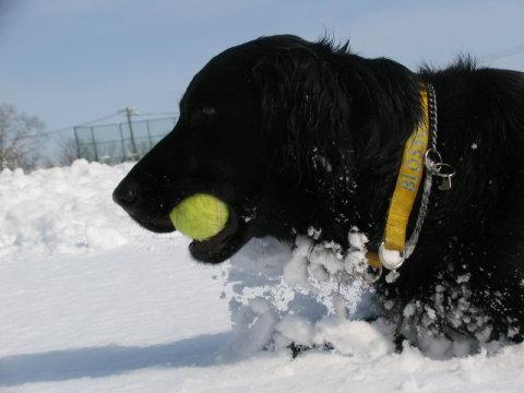 ボールボール♪