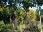 人ん家の竹林