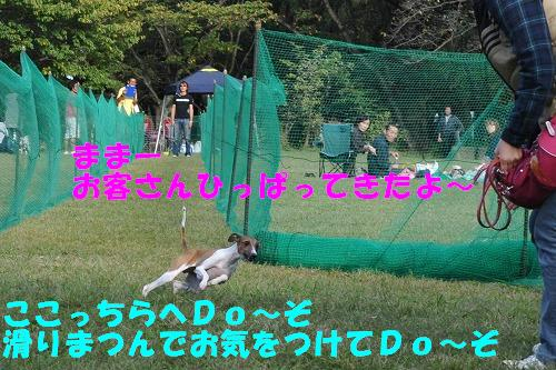 DSC_2091_20091017152109.jpg