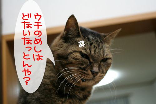 07113010.jpg