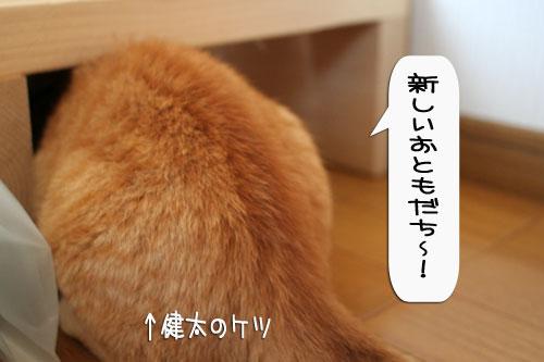 IMG_0052_20080113182231.jpg