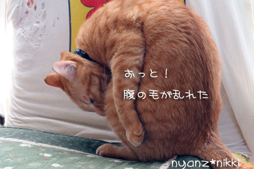 IMG_1173.jpg