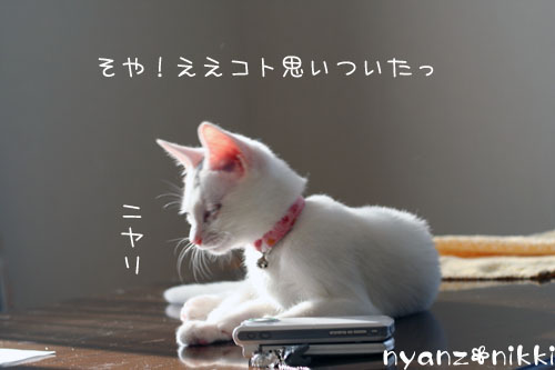 IMG_1261.jpg