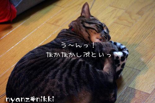 IMG_1584.jpg