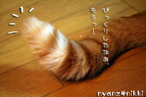 IMG_2074.jpg