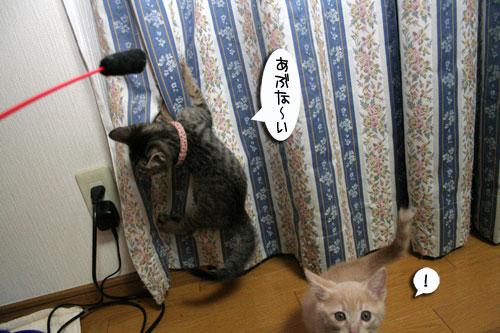 IMG_2662.jpg