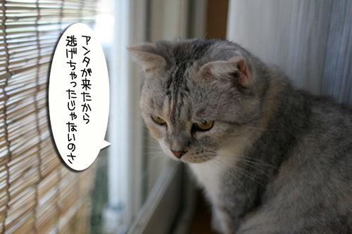 IMG_4190.jpg