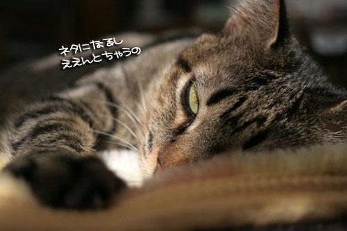 IMG_4224.jpg