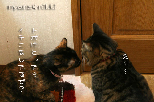 IMG_5152_20080810192331.jpg