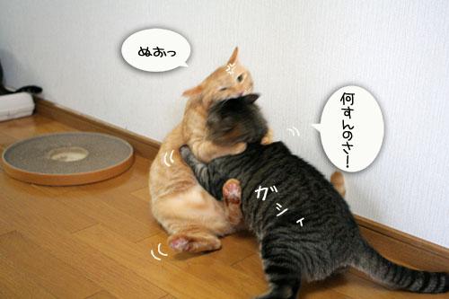 IMG_5489.jpg