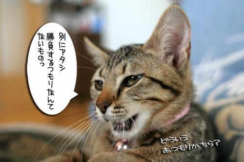 IMG_5571.jpg