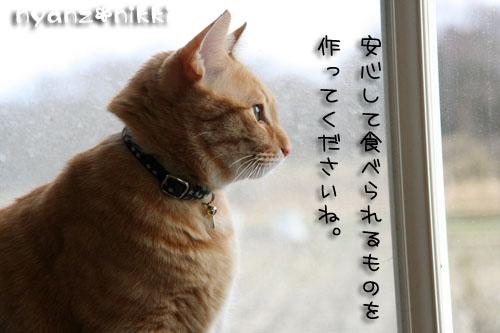 IMG_6109.jpg