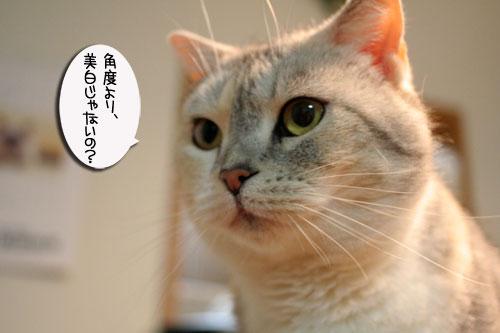 IMG_6838.jpg