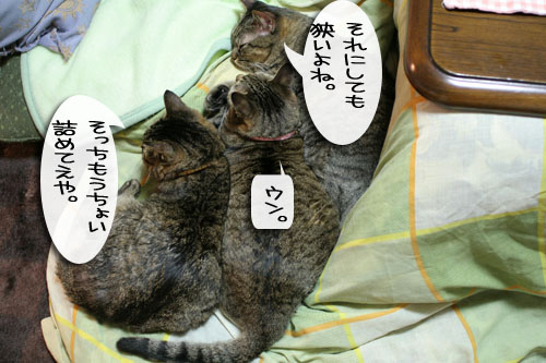 IMG_6987.jpg