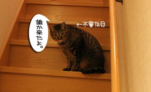 IMG_7522.jpg