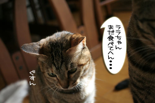 IMG_7774.jpg