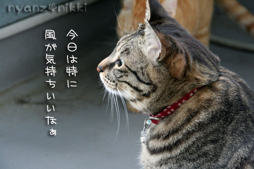 IMG_8217.jpg