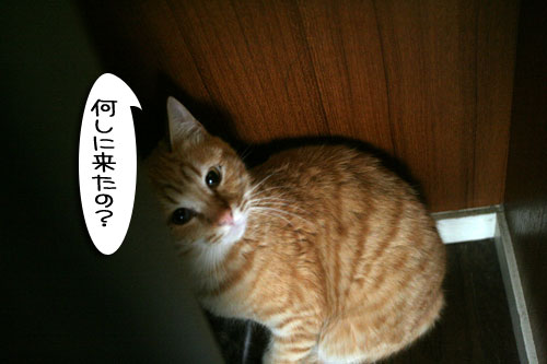 IMG_8243.jpg