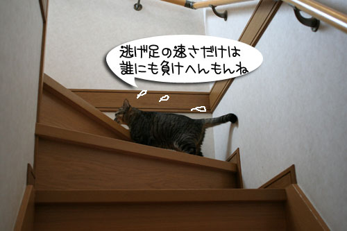 IMG_8719.jpg