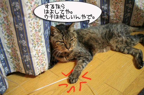 IMG_9003.jpg