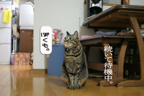 IMG_9529.jpg