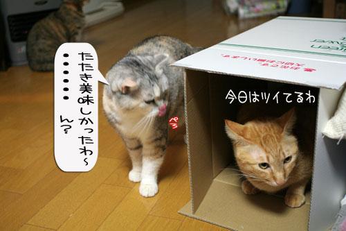IMG_9559.jpg
