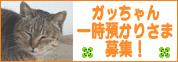 ga_chan.jpg