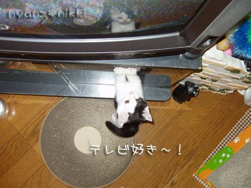 テレビすきー