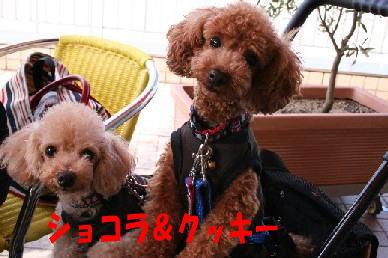 blog20051006b.jpg