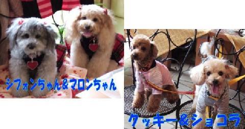 blog20051115c.jpg