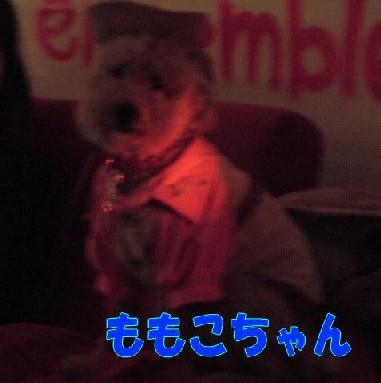 blog20051115d.jpg