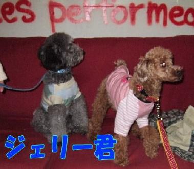 blog20051115f.jpg