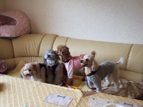 blog20051115i.jpg