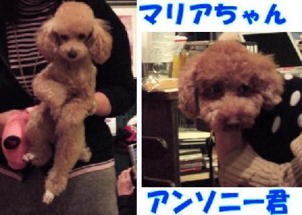 blog20051115t.jpg