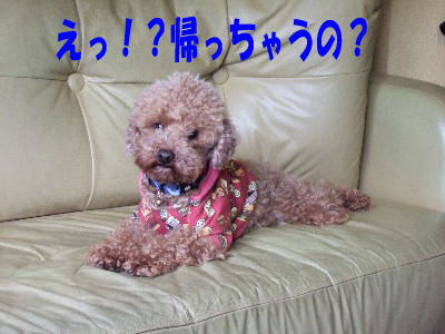 blog20060313h.jpg