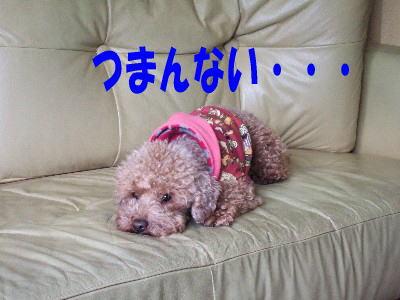 blog20060313i.jpg