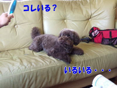 blog20060314f.jpg
