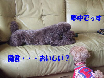blog20060314g.jpg