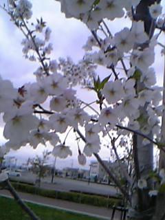 blog20060411e.jpg
