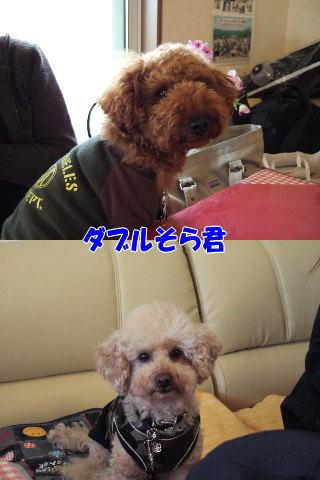 blog20060417a.jpg