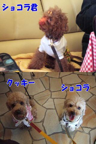 blog20060417b.jpg