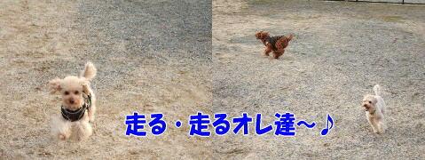 blog20060417i.jpg