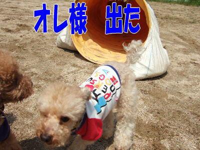blog20060524d.jpg