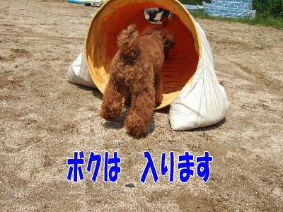 blog20060524f.jpg