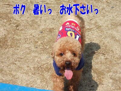 blog20060524n.jpg