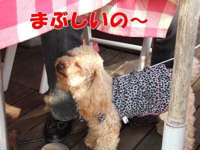 blog20060524t.jpg