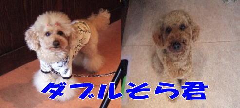 blog20060530f.jpg