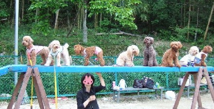 blog20060530x.jpg