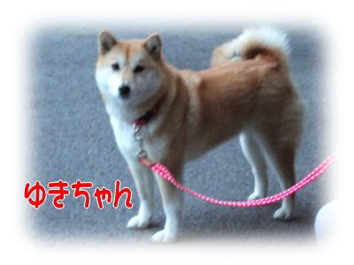 blog20070101b.jpg